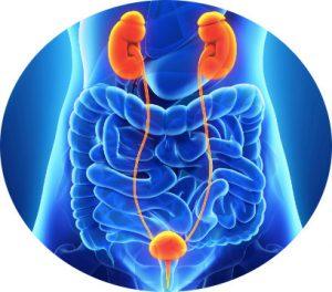 urologo oncologo en tijuana